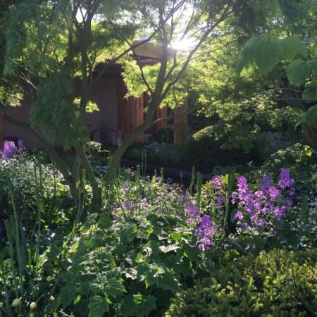 Chris Beardshaw's Morgan Stanley garden for Great Ormond Street Hospital