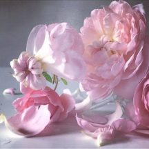 Nick Knight's Roses