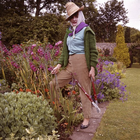 Lady Birley by Valerie Finnis - Copyright RHS